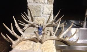 Texas Whitetail Deer Rack
